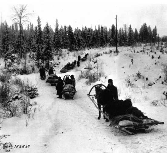 An ANREF supply convoy makes its way along a forest trail south of Archangel, Jan. 18, 1919
