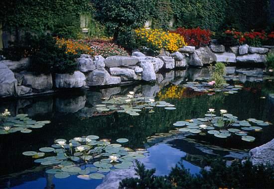 Fish Pond a