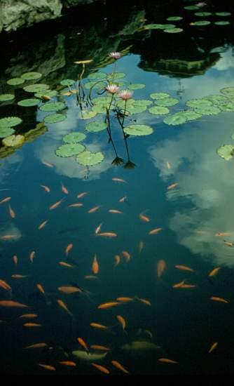 Fish Pond b